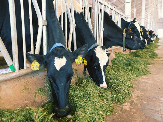trại bò sữa vinamilk tại lâm đồng