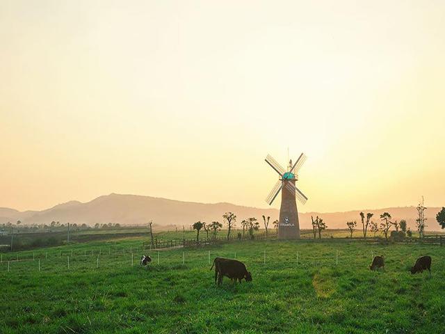 trang trại bò sữa Vinamilk Organic