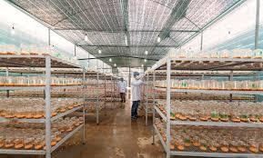 Cơ sở sản xuất Nấm