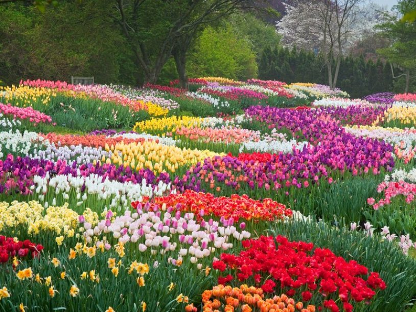 Dalat city flower garden