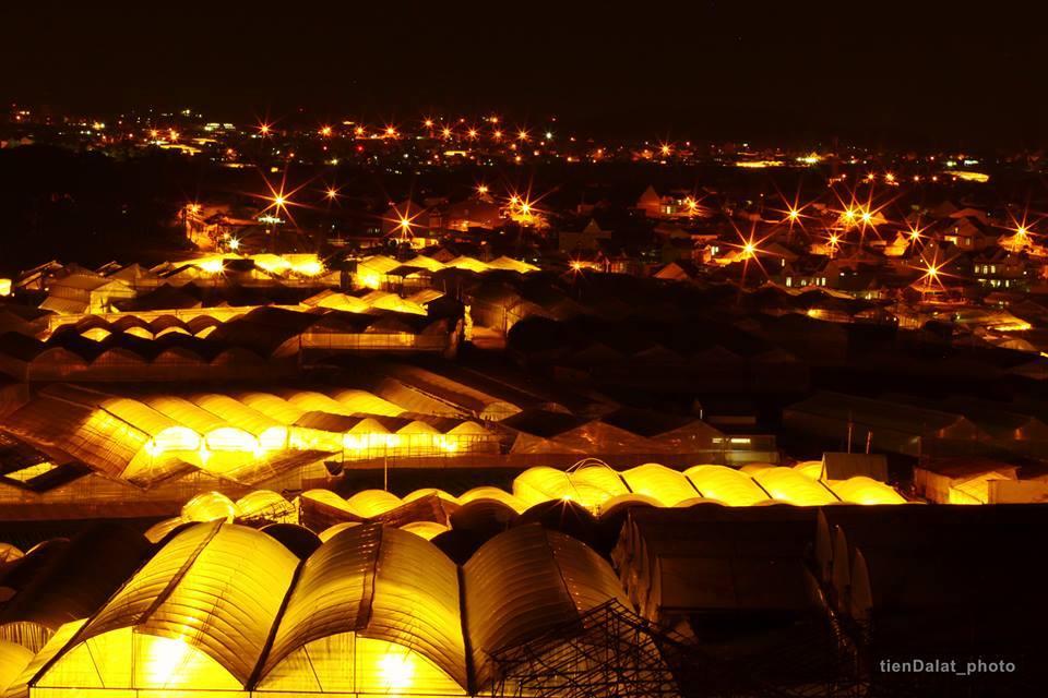 Thai Phien flower village at night