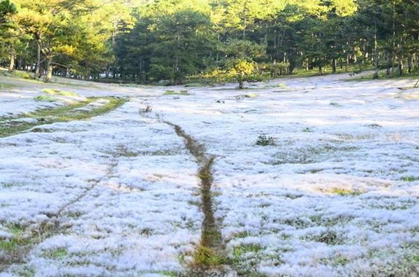 noel grass