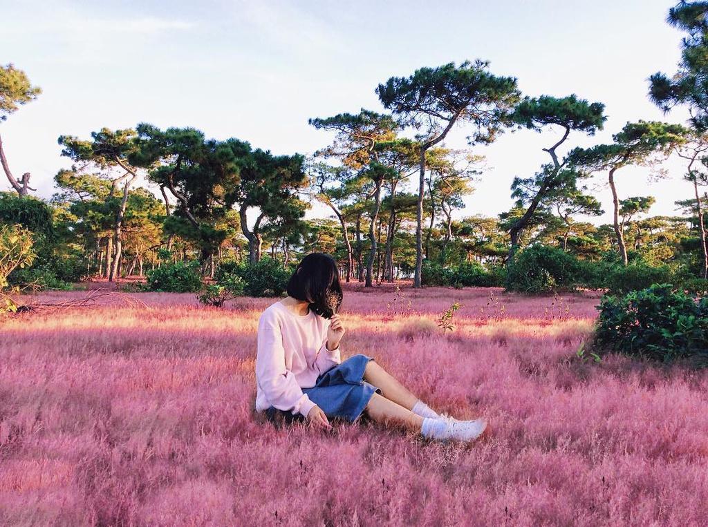 pink grass festival