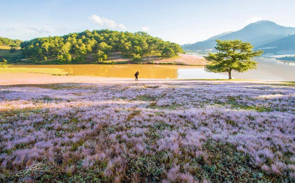 Pink grass hill at golden stream