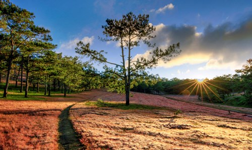 the pink grass hill at the golden valley