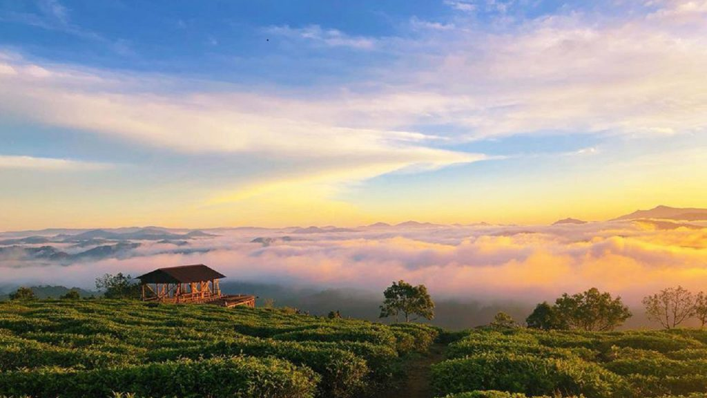 Tea hill travel experience