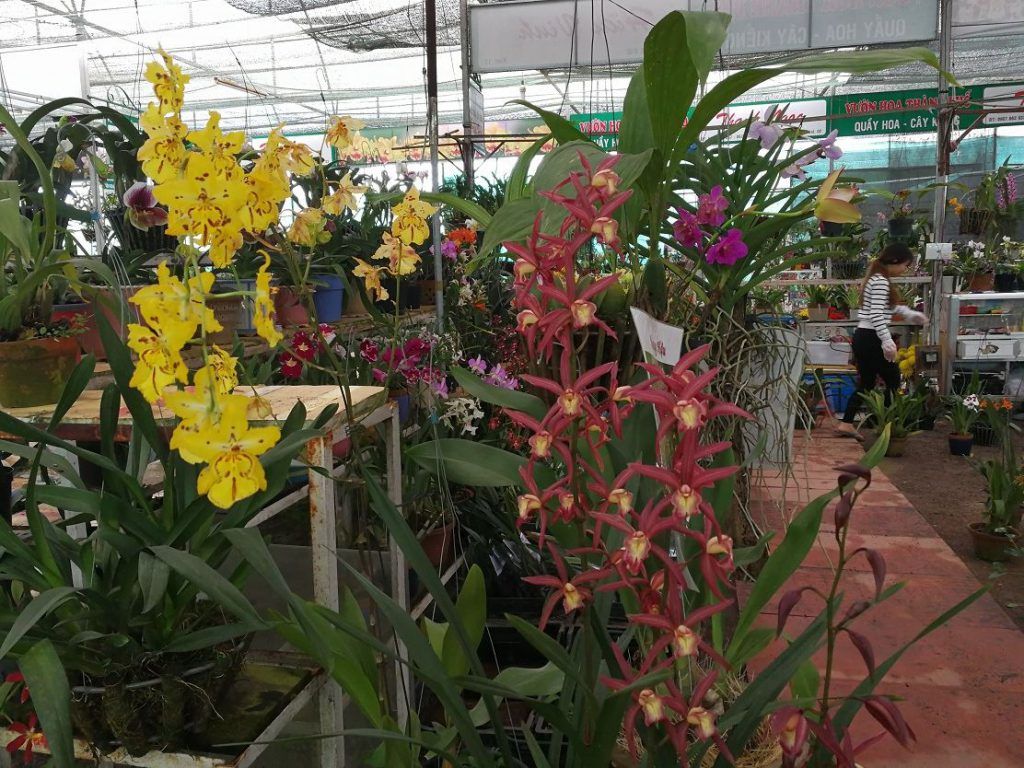 The orchid area
