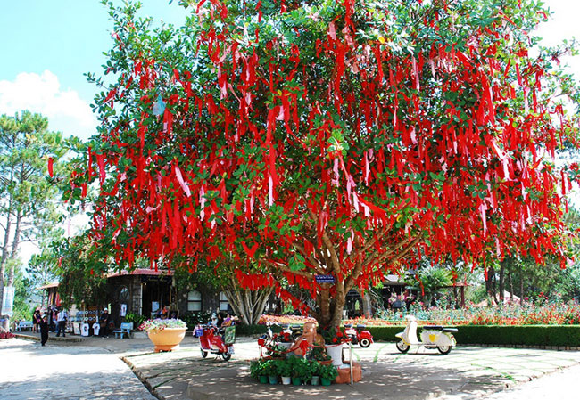 The wishing tree in Mong Mo hill