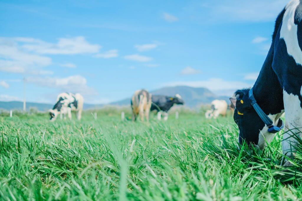 This is the first farm to meet European standards