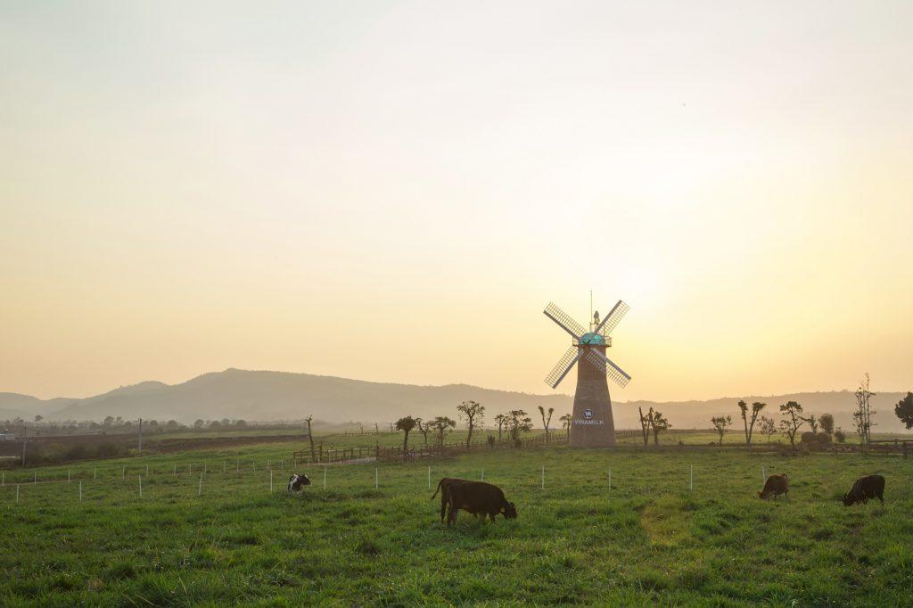 Vinamilk Organic Dairy Farm
