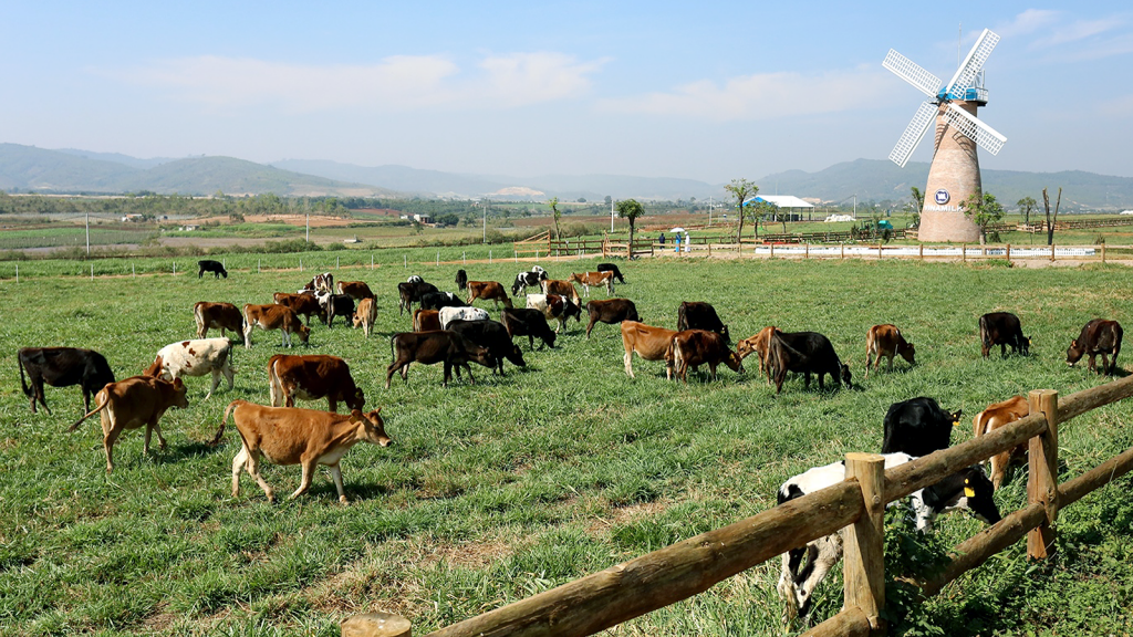 Visiting the organic farm, tourists will be surprised and amazed by the beauty of the farm