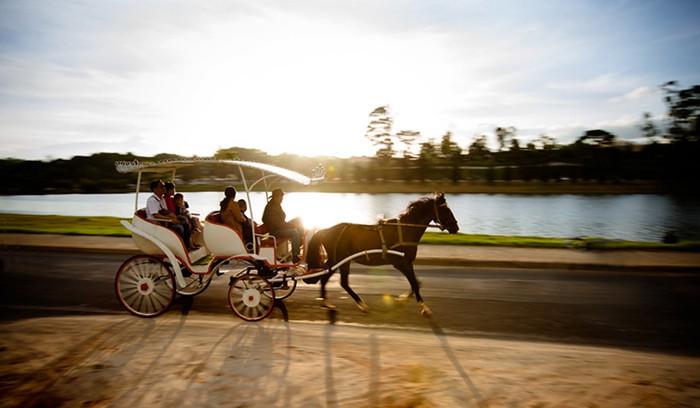 A hourse carriage ride