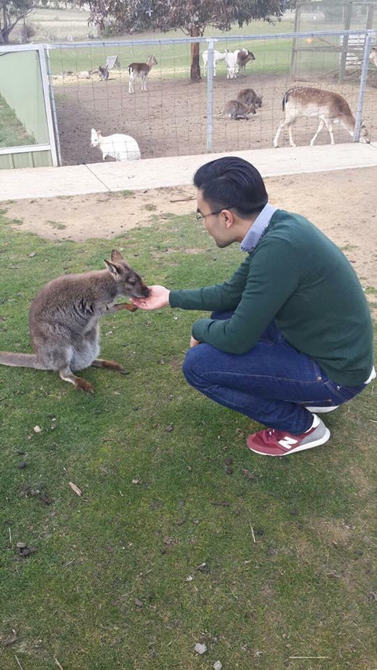 Cute little Kangaroo