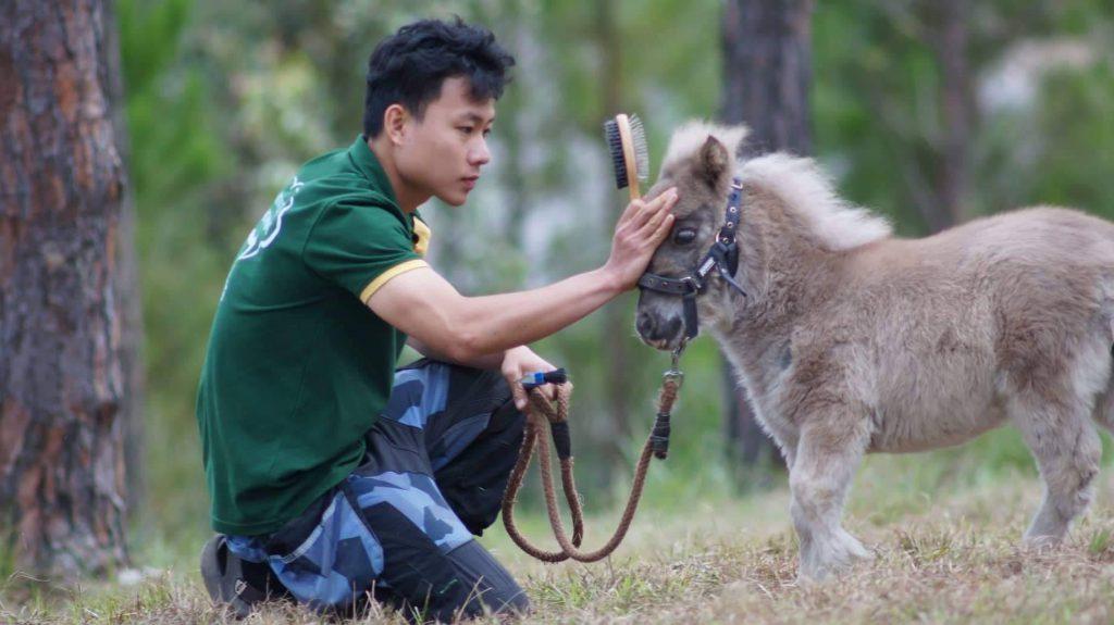 Littel Pony hourse